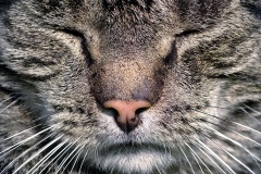 Alte-Katze