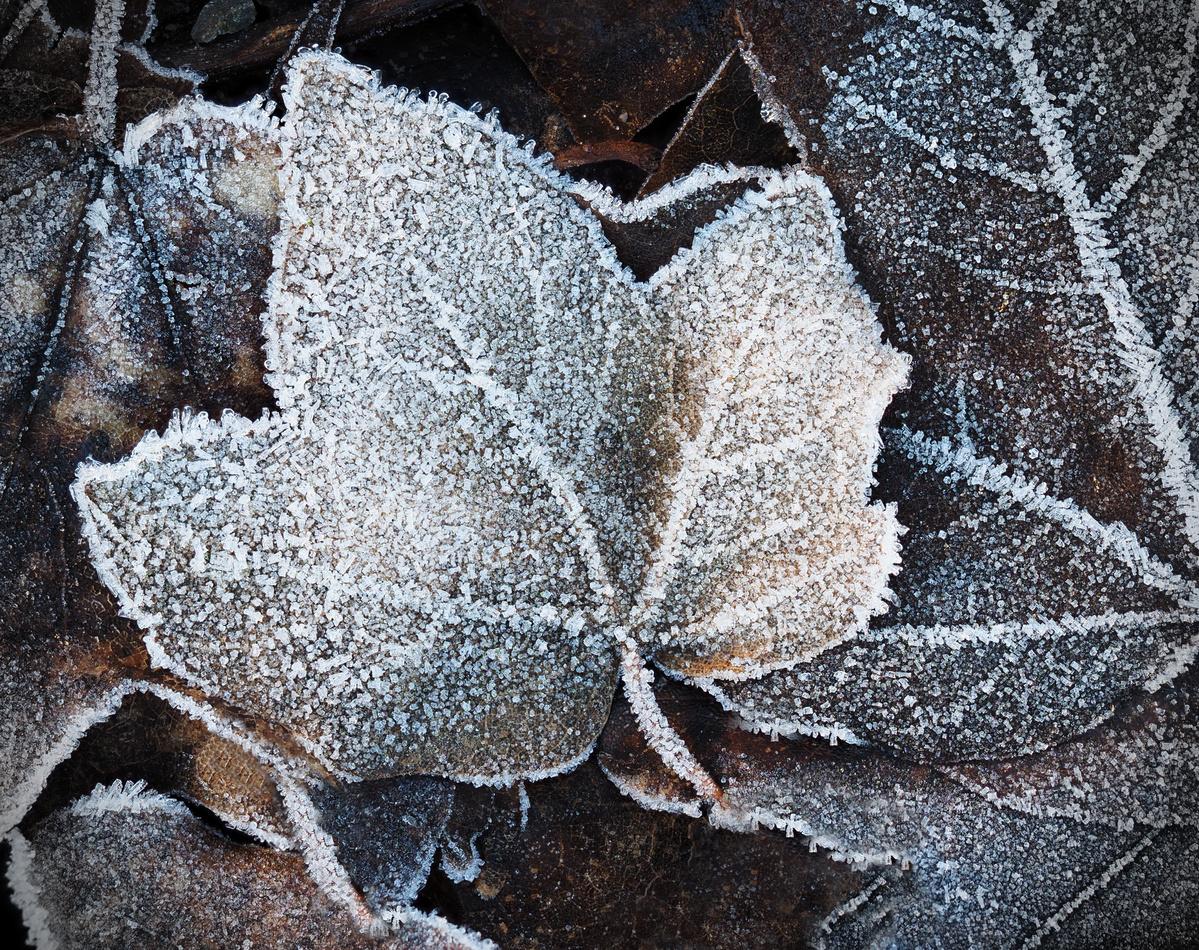 ~ winter leaves ~