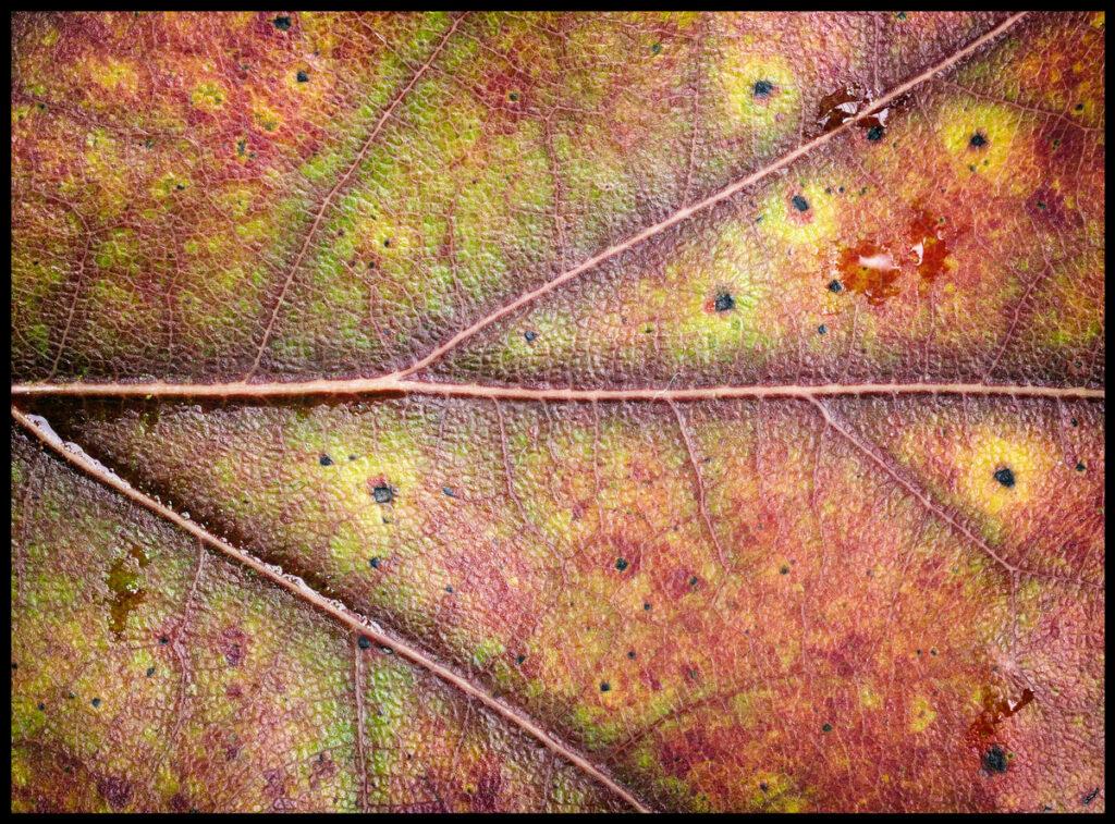 + autumn leaf +